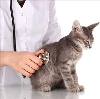 Ветеринарные клиники в Бавлах